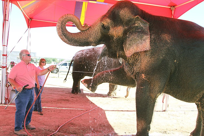 Gary Johnson and Joanne Smith give Tai the elephant a bath Thursday at the Mohave County fairgrounds.