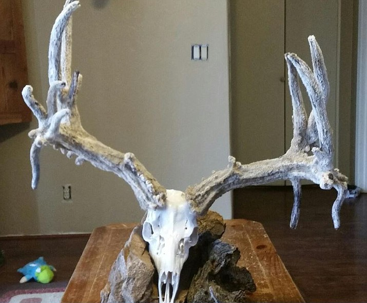 A distinctive set of 232-inch Cactus Velvet mule deer antlers are among the stolen items.