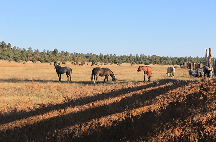 A herd of Arabian horses grazes at Hat Ranch Oct. 23 while a herd of Elk share the same pasture in the distance.