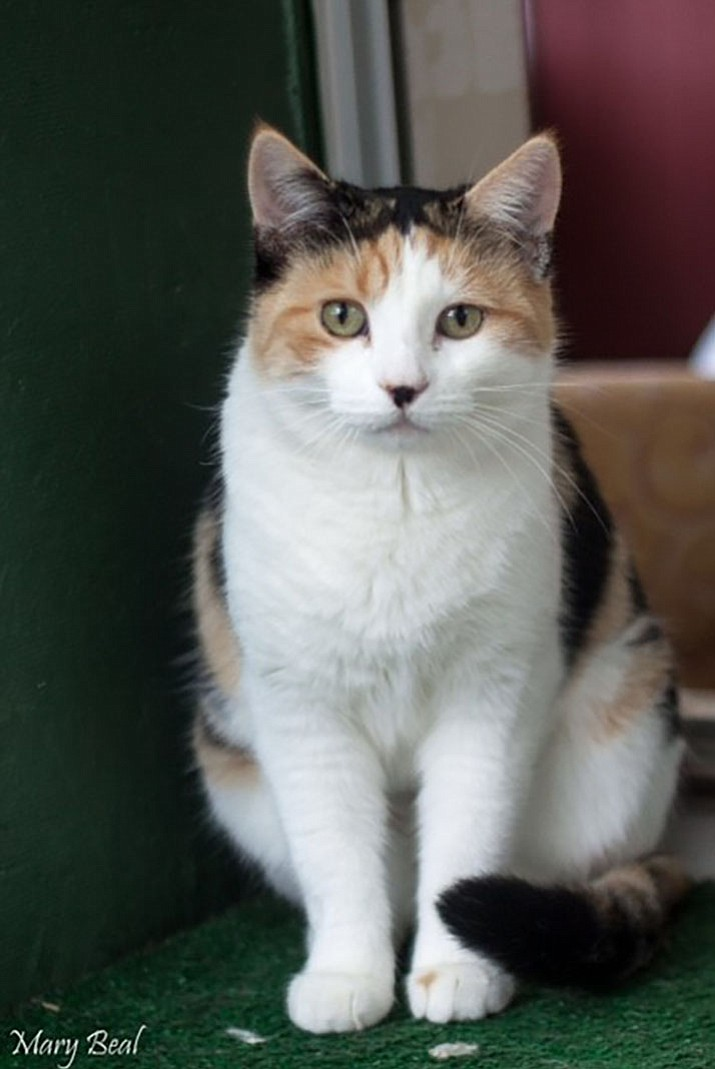 Buttercup is a beautiful female calico, who was found trying to make her home in a drainage ditch.