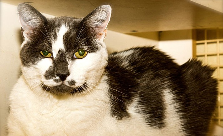 Marple is 8 years old, is gentle and mellow.