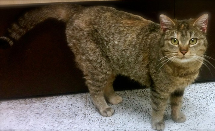 Katt is a 1 1/2-year-old gal, so sure about her love of affection that she'll lie down and roll over until you pet her!