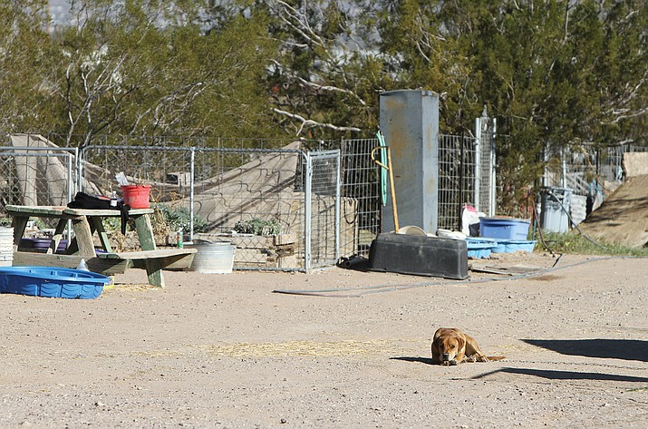 Twenty dogs and three cats have been adopted from RUFFF since the house on the property was condemned last Thursday.