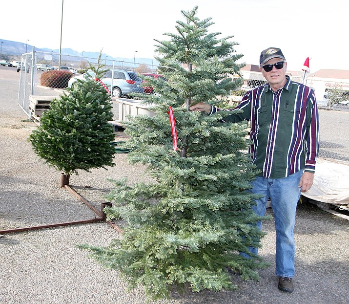 Camp Verde Kiwanian Dave Kaminsky stands with one of the roughly 40 Christmas trees remaining at the Camp Verde Kiwanis annual Christmas tree sale, located in the Bashas' parking lot. (Photo by Bill Helm)