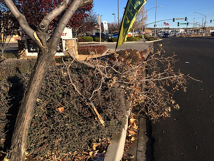 A small tree along Willow Creek Road in Prescott barely remains standing with several of its branches broken off the morning after the Prescott area was hit with strong winds.