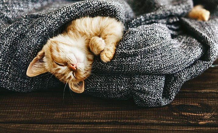 Provide pets with blankets, instead of heat lamps or heaters.