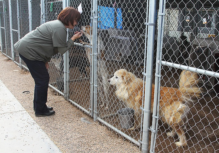 Lisa Snyder, Western Arizona Humane Society Operators Manager, pictured Tuesday with some of the dogs from RUFFF now housed at WAHS.  Animals are still available for adoption through RUFFF and WAHS.