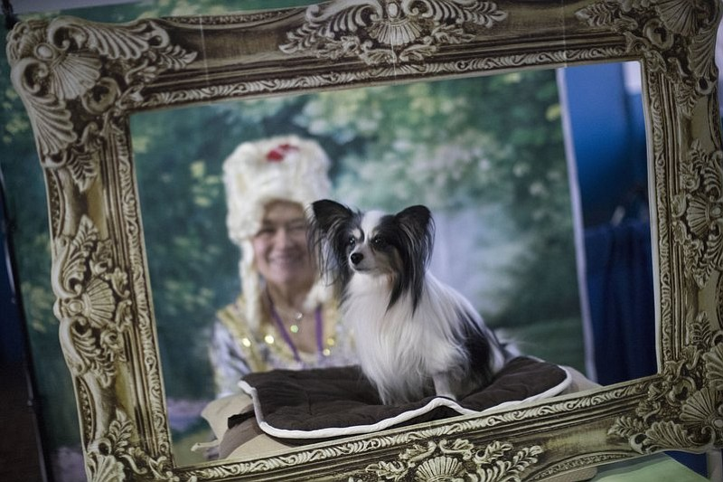Connie Barata as Marie Marie Antoinette poses for a photo with Mojo, a papillon from East Windsor, N.J., during the meet the breeds companion event to the Westminster Kennel Club Dog Show, Saturday, Feb. 11, 2017, in New York. (AP Photo/Mary Altaffer)
