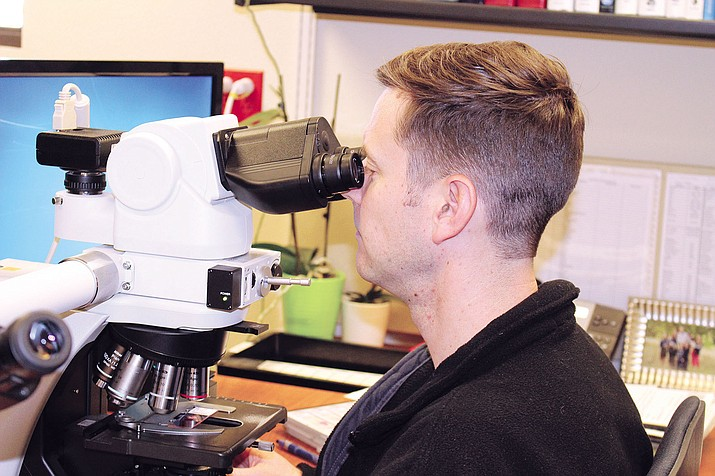 Dr. Ryan Swapp, a pathologist at Kingman Regional Medical Center, looks at cancer cells through the microscope in his office. Swapp said Obamacare was written for rural geographies such as Mohave County.