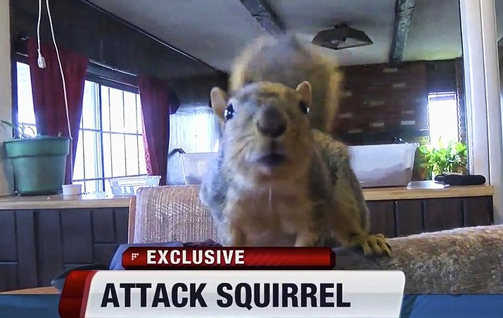The teenager burglar told police the squirrel's attack scared him because he wasn't expecting to have a squirrel come flying out of nowhere at him.
