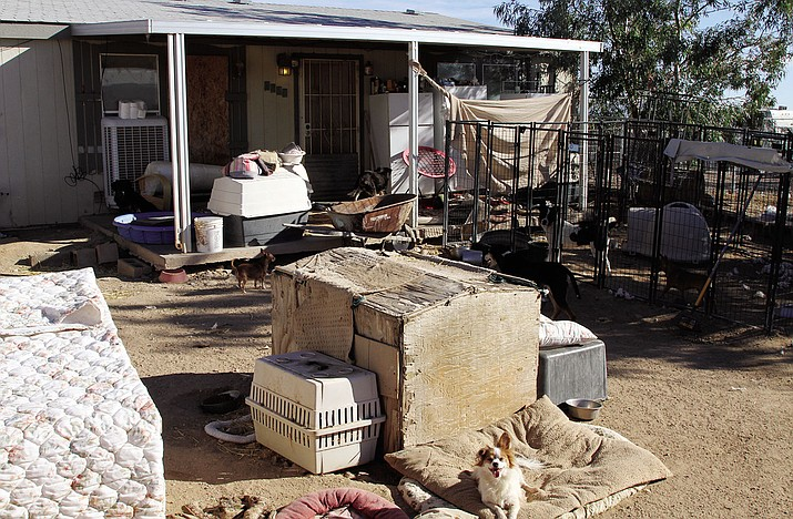 This was the backyard of the house on the 40-acre property on Laguna Road the day health officials closed RUFFF in December.