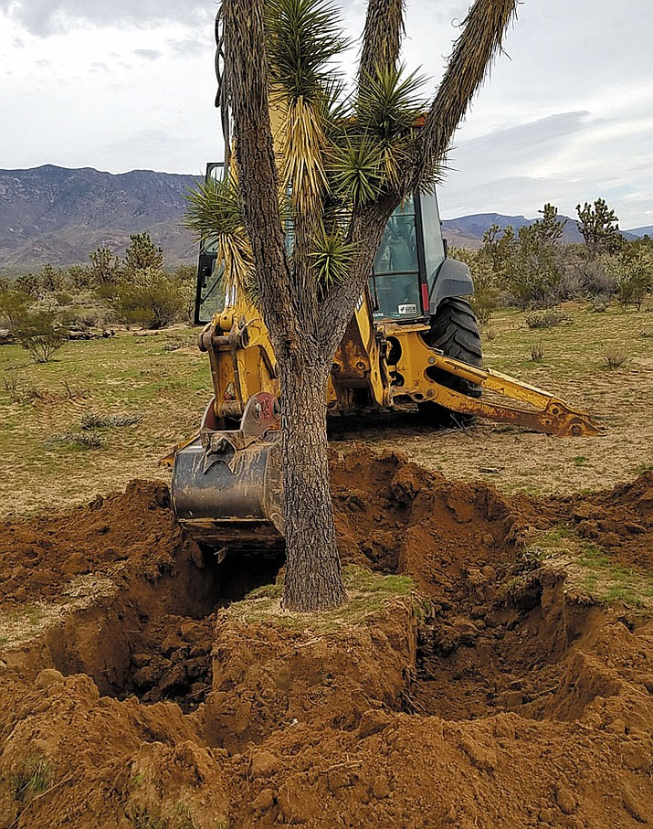 A Joshua Tree is removed for transplant. Mt. Tipton Elementary School is included in the list of recipients.