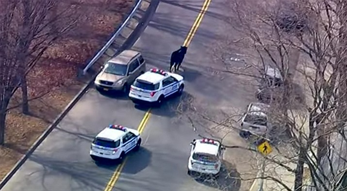 A cow that escaped from a slaughterhouse led police on a wild chase through New York City streets Tuesday. Officers were able to corral the animal in a backyard after a chase that lasted more than an hour.