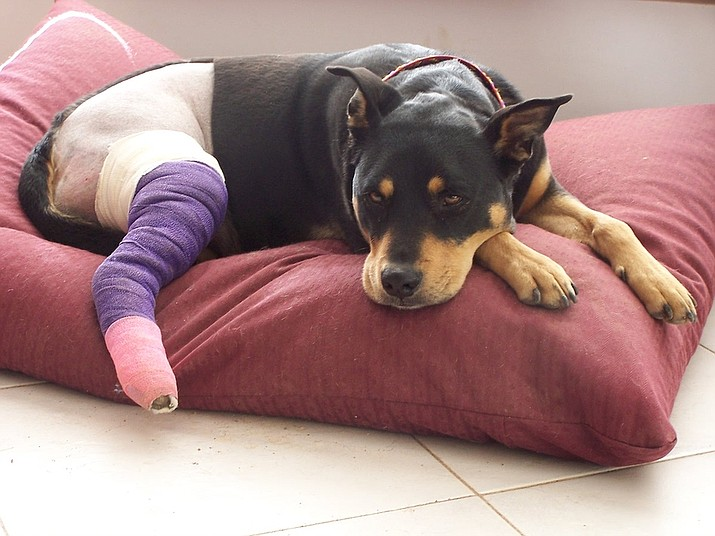 Make sure your injured pet gets the care he or she needs.