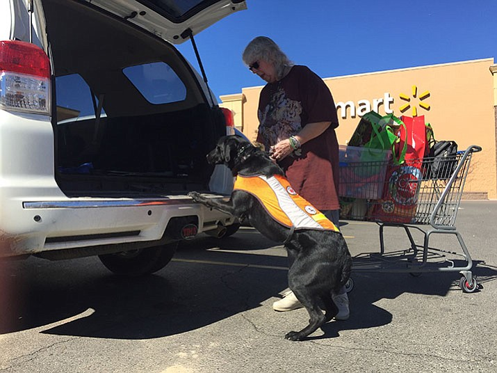 Pam Jackson puts her husband\u0027s service dog Thor into their car at a Prescott & Handicapped placards and plates: Who gets them \u0026 how? | The Daily ...