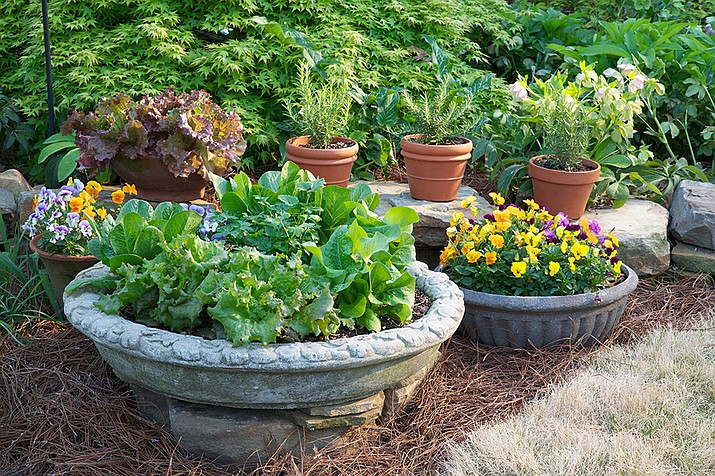 Container gardens are an easy way to incorporate color, edibles and interest into the landscape.