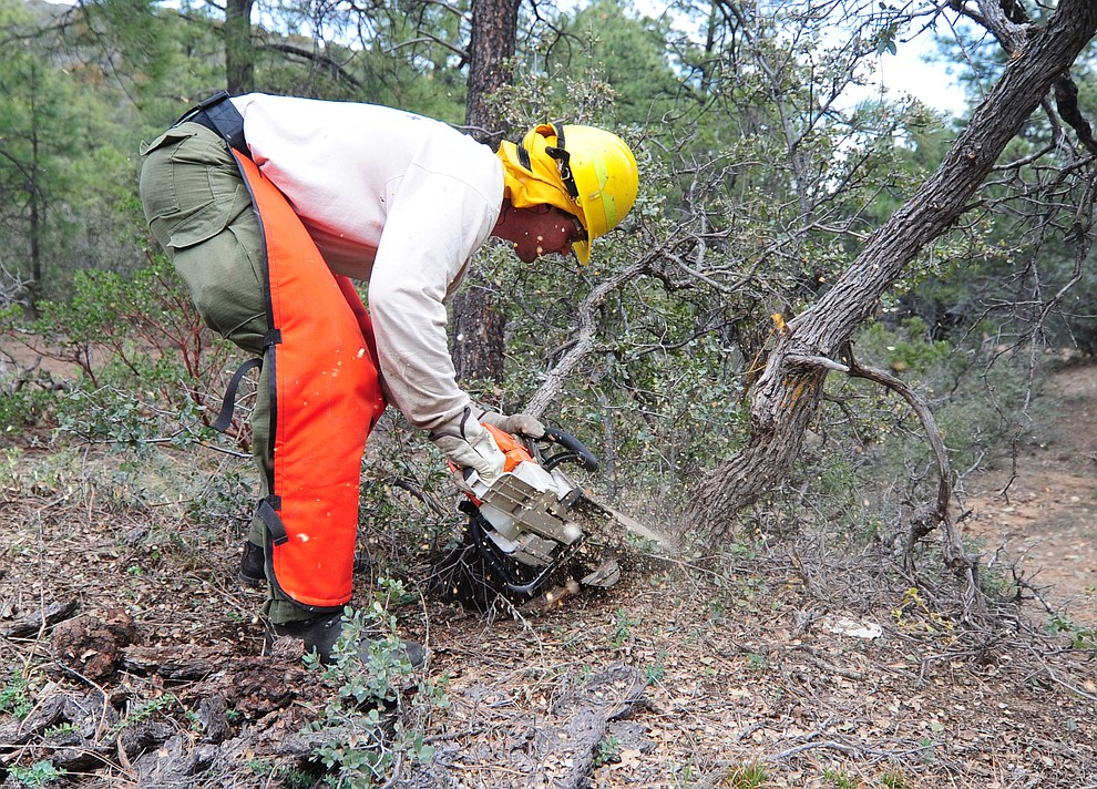 Groom Creek Fire's Logan Wallace cuts brush in the S212 Wildland Fire Chain Saws class during the Arizona Wildfire Academy field day Wednesday, March 15 near the Iron Spring Road and Skyline Drive area in Prescott. (Les Stukenberg/The Daily Courier)