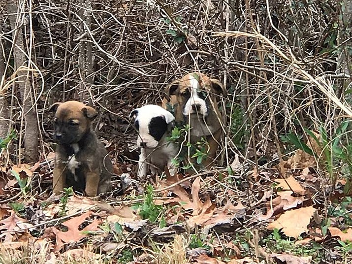 A Georgia State Patrol trooper and his police dog, Tek, found three abandoned puppies while patrolling a southwest Atlanta subdivision on March 13, 2017. Trooper Jordan Ennis and a few of his colleagues adopted the puppies as their own.