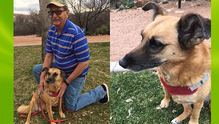 A Dog's Tale: From rough Russian backroads to Arizona, Bella finds home sweet home in Cottonwood