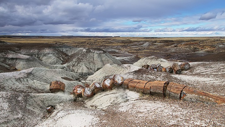 Exploring a new Petrified Forest