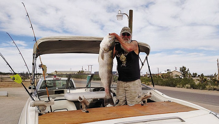 Tim Flatt of Meadview shows off the 28-pound, 12-ounce striped bass he caught on the first day of spring at Lake Mead. His friend landed a 48-pounder the next day.