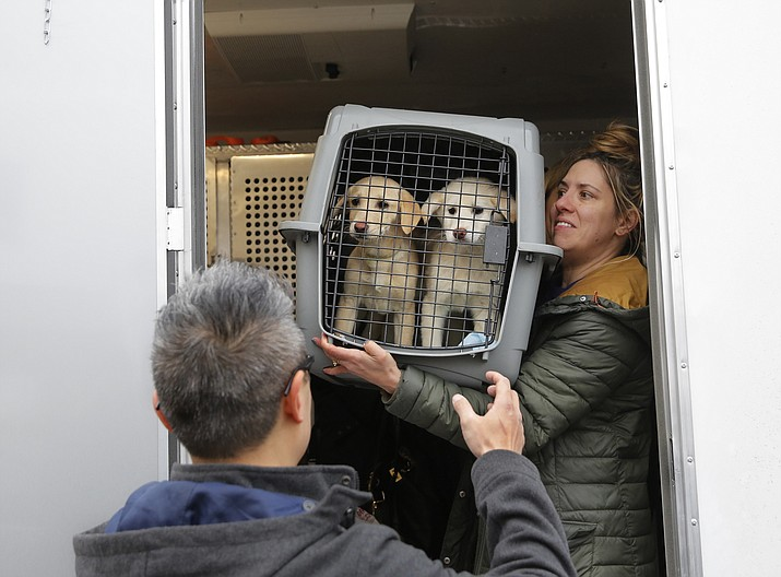 A crate holding two puppies rescued from a South Korean dog meat farm are loaded onto an animal transport vehicle near Kennedy Airport by Animal Haven Director of Operations Mantat Wong, left, and volunteer Nicole Smith Sunday, March 26, in the Queens borough of New York.  The Humane Society International is responsible for saving 46 dogs that would otherwise have been slaughtered.