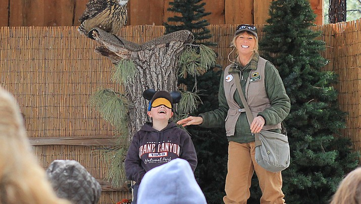 Back in flight: Birds of Prey show returns to Bearizona