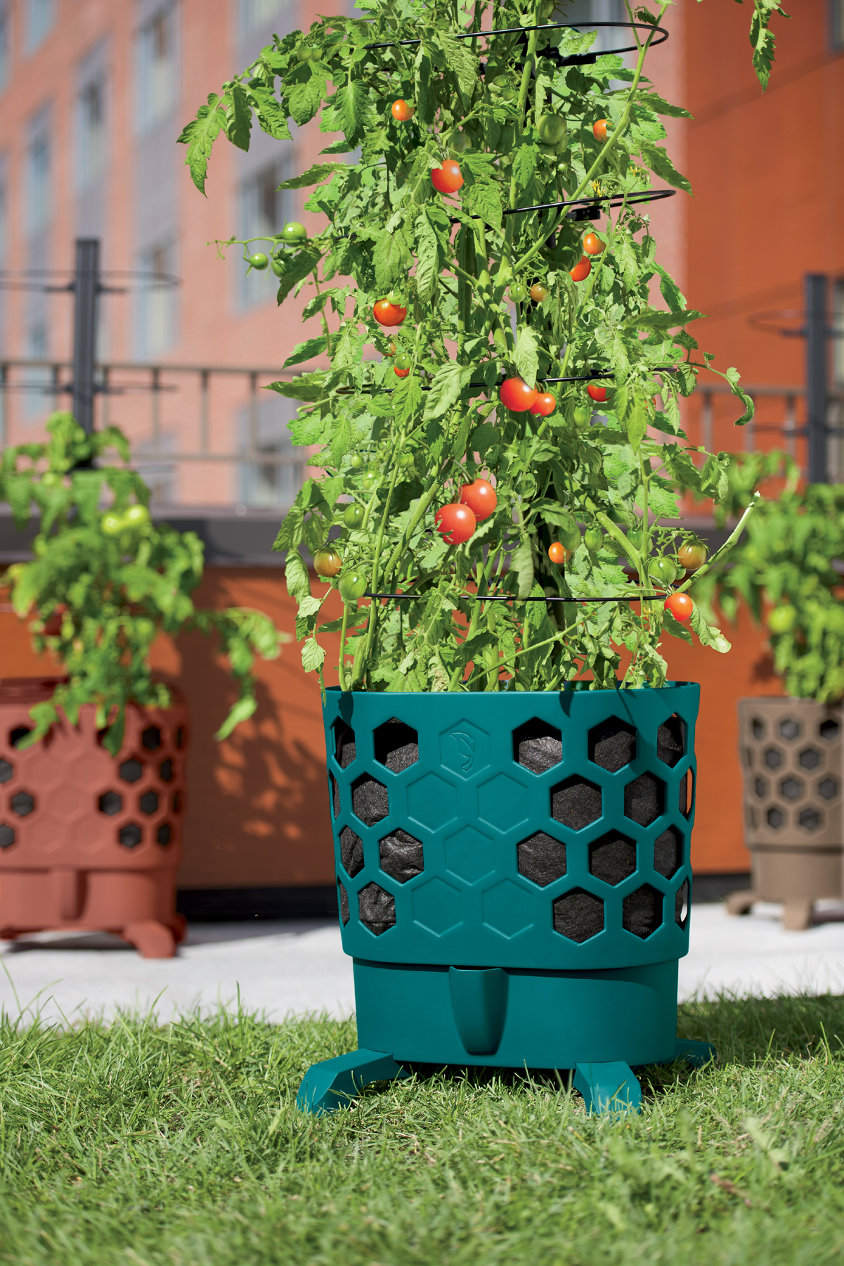 Grow abundant tomato harvest in a pot