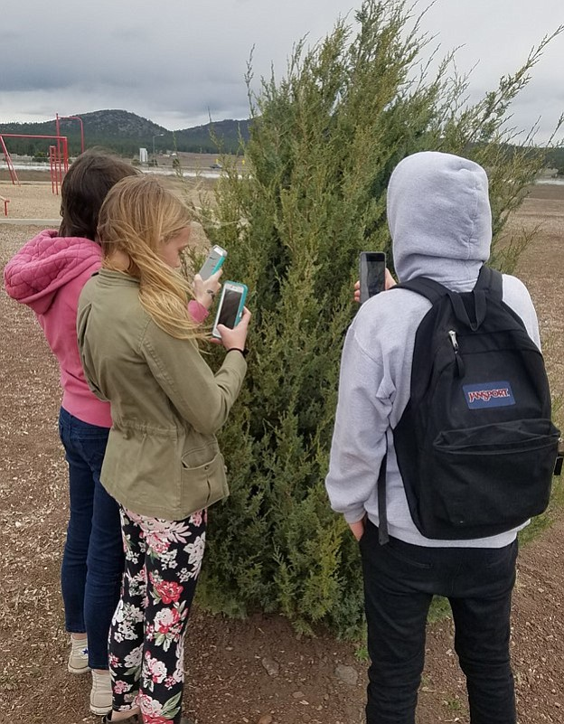 Students use the iNaturalist app on their phones to identify and catalog plants and animals at Williams Elementary-Middle School.