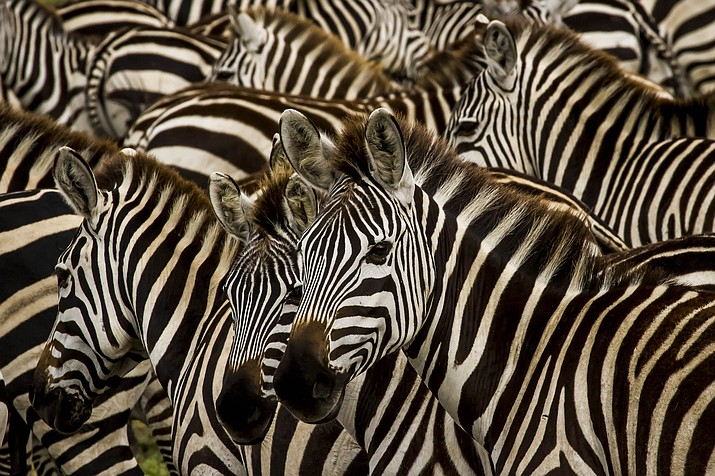 Serengeti Stripes, by Michael McDermott