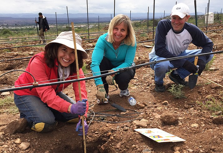 Since its inception in 2011, Plant-A-Vine attracts dozens of individual and team volunteers from across Yavapai County who want to be a part of something special. (Photo courtesy of Yavapai College)