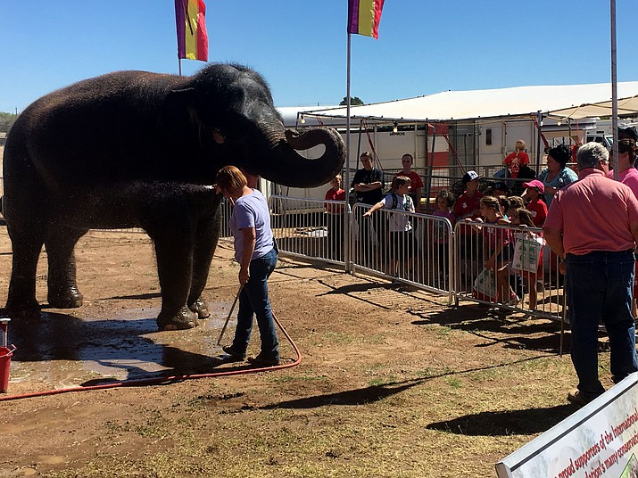 Circuses or shows with wild and exotic animals were banned by the Board of Supervisors Monday.
