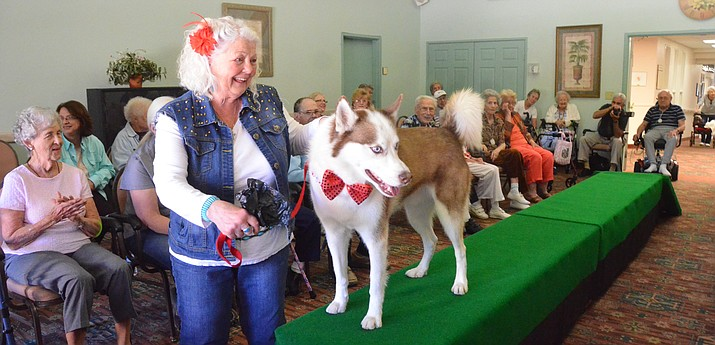 Doggie Fashion Show needs dogs