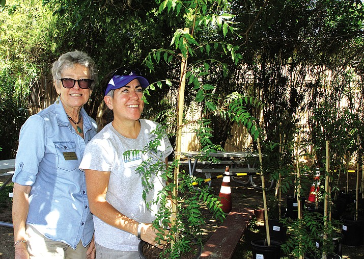 Caitlin Flaherty holds a free Chinese Pistache tree she received from Unisource Energy Sources. JoAnn Bennet stands next to her. Both are members of Cerbat Garden Club.