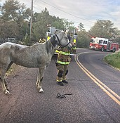 Bee swarm attacks people, horses, dogs photo