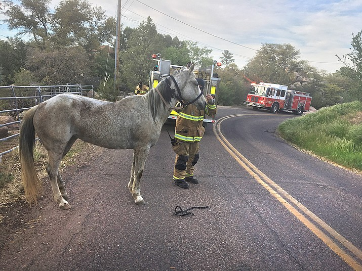 Prescott Firefighter takes care of horse involved in bee attack. (Courtesy)