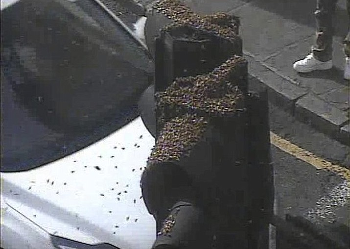 This photo taken with a traffic camera, shows a swarm of insects on a traffic light in south-east London, Tuesday May 16, 2017. Social media users in London are buzzing about an apparent swarm of flying insects that has descended on one part of the city. (Transport for London via AP)