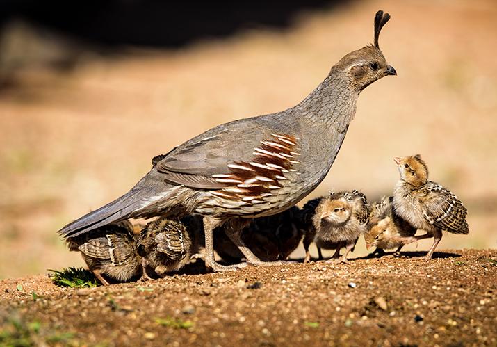 Birding Baby Birds Face A Lot Of Hazards The Daily