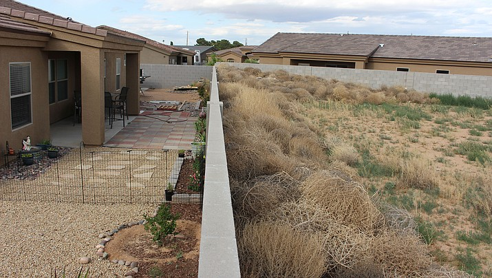 Tumbleweeds are piled high against the wall of a home at Legacy at Walleck Ranch, threatening to blow over the wall and into the yard.