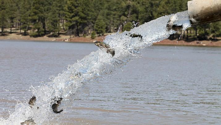 Fish stocked in northern Arizona lakes