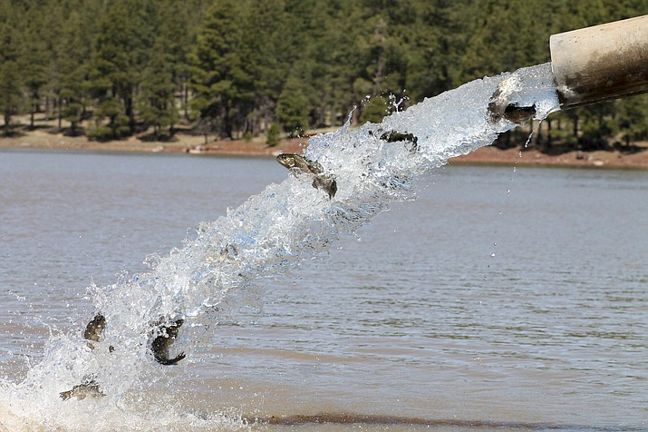 Fish stocked in northern arizona lakes williams grand for Fishing lakes in arizona