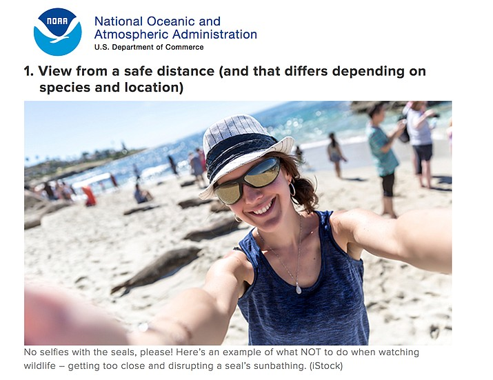 Screenshot from noaa.gov warning people not to take selfies with seals.