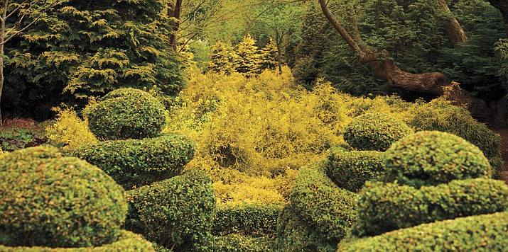 """This undated photo provided by Rizzoli shows the yellow garden on Architect Peter Marino's property and is featured in the book """"The Garden of Peter Marino,"""" by Peter Marino. Among the apple orchards, art objects, and hundreds of evergreens on Marino's 12-acre property in the Hamptons of New York is a garden color wheel, with purple flowers at the north end of the property, pink at the south, and red and mixed hues to the east and west. (Jason Schmidt/Rizzoli via AP)"""