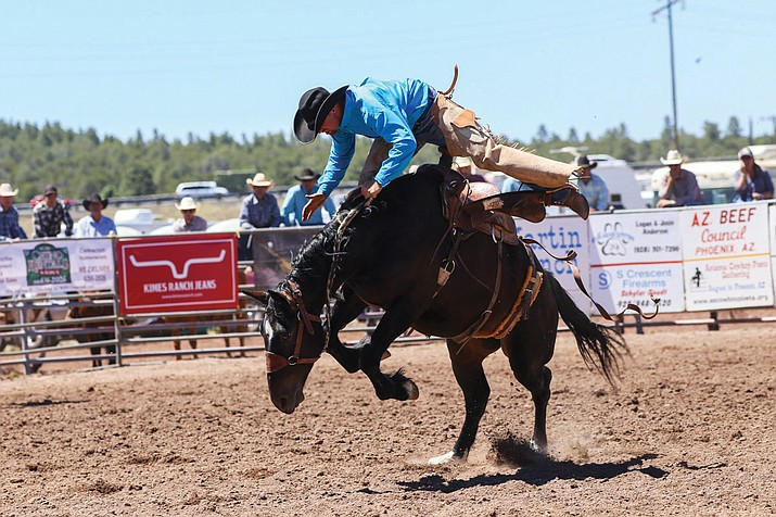 A bronc rider tries to hang-on during the 2016 Cowpunchers Reunion rodeo in Williams.