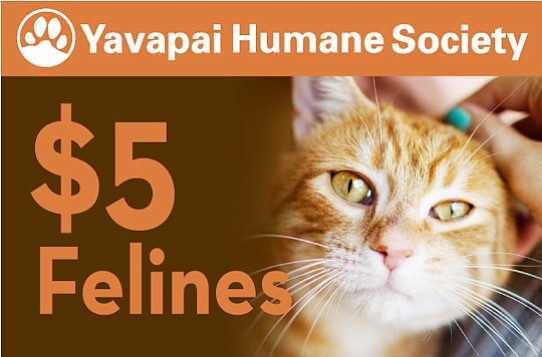 June 23-25, the adoption fee for all cats 6 months and older at Yavapai Humane Society will be just $5. (Cat testing fees for Feline Immunodeficiency Virus and/or Feline Leukemia Virus for some cats may apply.)