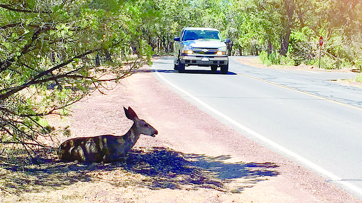NPS reminds drivers to be on the lookout for wildlife that may be taking refuge in shady areas near roadways.