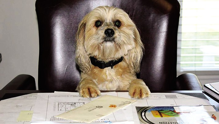 Bow-Wowing Into Work: Today is Take Your Dog to Work Day