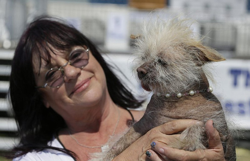 Linda Elmquist, of Tucson, Ariz., holds up Josie, her Chinese crested mix, before the start of the World's Ugliest Dog Contest at the Sonoma-Marin Fair Friday, June 23, 2017, in Petaluma, Calif. (AP Photo/Eric Risberg)