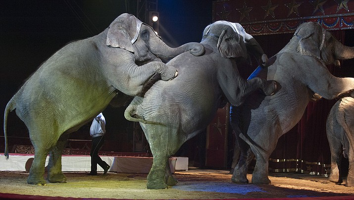 Mohave County has taken steps toward banning traveling circuses from performing in country limits.