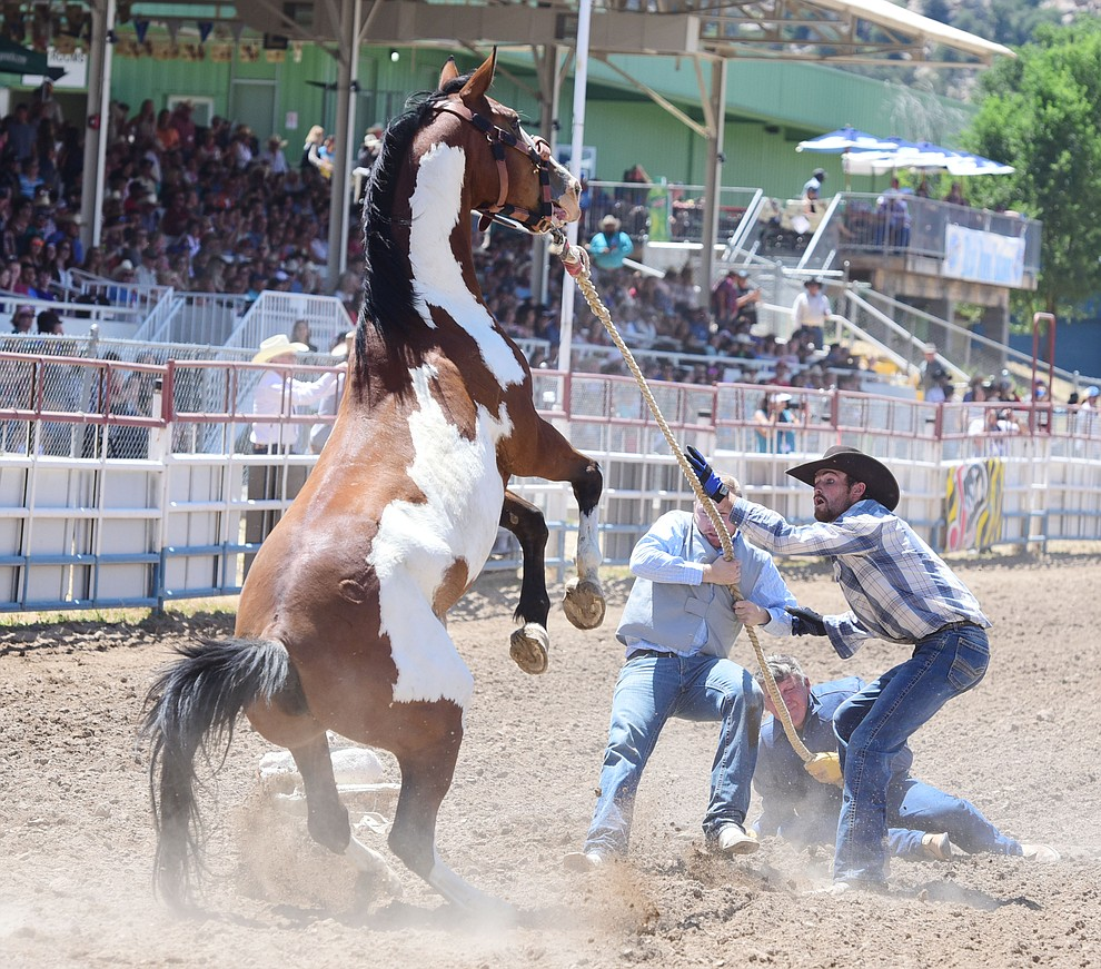 Wild Horse Race/Extreme Bronc Riding during the 4th performance of the 2017 Prescott Frontier Days Rodeo at the Prescott Rodeo Grounds Saturday, July 1.  (Les Stukenberg/Courier)